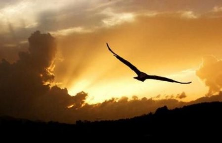 Literatura A águia Que Não Queria Voar James Aggrey Laitos