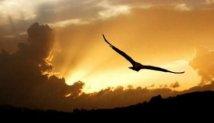 Literatura | A águia que não queria voar - James Aggrey
